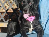 Sadie-PENDING's story To be considered for adopting a