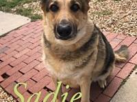 My story Poor Sadie : ( Sadie has had a rough start on