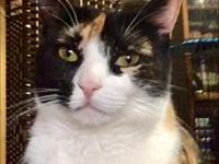 My story Sadie is a sweet two year old calico rescued