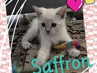 Saffron's story ** ADOPTION PENDING ** We are no longer