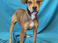 Sage's story Sage is an adorable 8 month old Terrier,