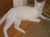 This kitty can be adopted by going to our web site