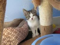 Sage's story Sage is a fun little kitten who enjoys