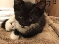 Sage's story Hi! I'm Sage, and I'm a new addition to