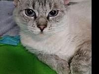 Sage's story Sage is a beautiful Siamese mix. She is