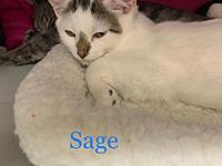 My story Sage and his siblings were found abandoned