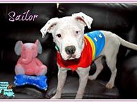 Sailor's story Please only apply if you have vet