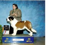 NorDogs litters are out of Champion Blood line Saint