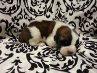 i have 8 purebred St Bernard young puppies. 5 male and