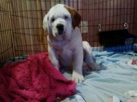 We have 1 female available! she is 13 week's old and
