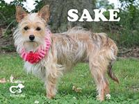 Sake's story If you think you may be interested in