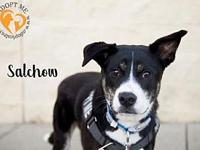 Salchow's story Salchow  is a 2 year old border