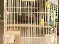 pair of parakeets(male & Female) with large cage and