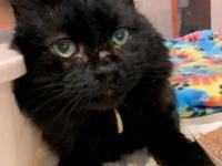 Salem's story Salem is a wonderful boy looking for his