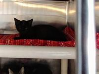 Salem's story Meet Salem! Very lovable and sweet. $35