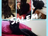 Salem's story Salem The Sweet!! This handsome young man