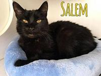 Salem's story SALEM - neutered male, domestic