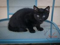 Salem's story If you are not viewing this adoption