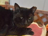 Salem is a super-sweet boy who has many scars from life