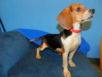 Sally Brown's story Beagles come in two sizes -- 13""