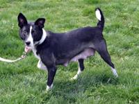 Sally is a female Cattle Dog mix who was rescued from a