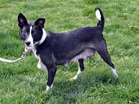 Sally's story Sally is a female Cattle Dog mix who was