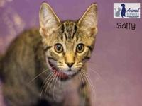 SALLY's story Sally is a very sweet, loveable and likes
