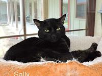 "Sally's story Case #13745. Sally was ""at large"" at a"