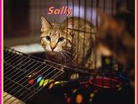 Sally's story Sally is a loving kitty. She is spayed