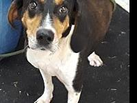 Sally's story Sally is a 4 year old Hound X female. She