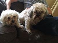Sally's story Sallie on the left and Rascal on the