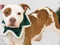 Sally Fields A037974's story This sweet girl is looking