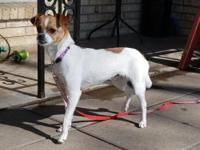 SallyAnn is a young Chihuahua mix with lots of energy.