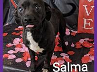 Salma's story Salma Dob 2013 Chiweenie Dogs yes Cats no