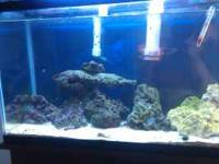 I am selling my salt water aquarium with a bunch of