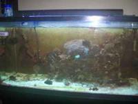 65 gallon Salt Water Fish Aquarium includes live rock,