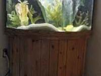 top of the line fish tank with 3 fish 55gl tank call