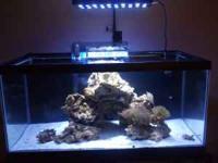 40 gallon saltwater aquarium with 70 pounds haitian