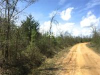 80.47 acres +/- of 2010 planted pines(MCP) in rural