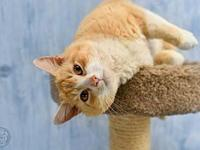 Sam's story Sam is a 2-year-old orange tabby and white