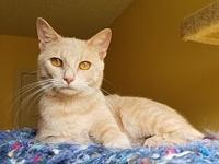 Sam's story Sam is a fantastic cat. His main goal in