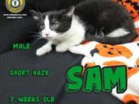 Sam's story You can fill out an adoption application