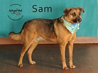 Sam's story Woof! My name is Sam and it's nice to meet