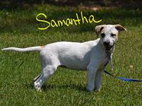 Samantha's story Samantha is a sweet playful puppy in