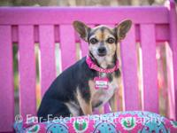 Samantha is a sweet girl who is looking for a lap to