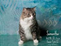 Samantha's story SAMANTHA WAS SPAYED AT HSOY CLINIC ON