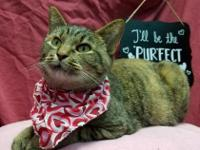 Samantha is a beautifully colored tabby cat with black,