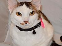 Samantha's story **BONDED PAIR** Meet Samantha and