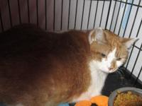 This cat is currently available for adoption at our