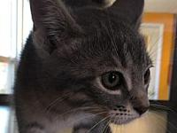 Samauri's story Samauri is an adorable kitten! Stop in